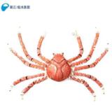 フェリシモ YOU+MORE! × 新江ノ島水族館【数量限定】「全カニが泣いた…」 感動の脱皮の瞬間を、ぬいぐるみに。